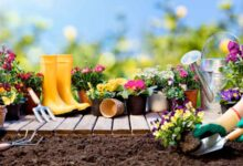 Photo of 15 Gardening Ideas That Every First-Time Gardener Should Know