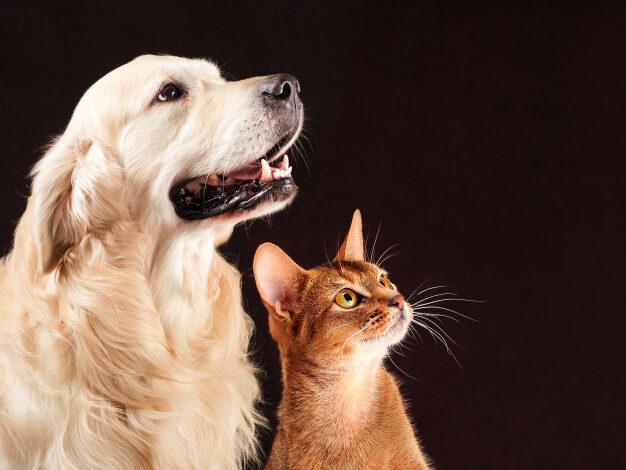 Money-Saving Tips for Pet Lovers